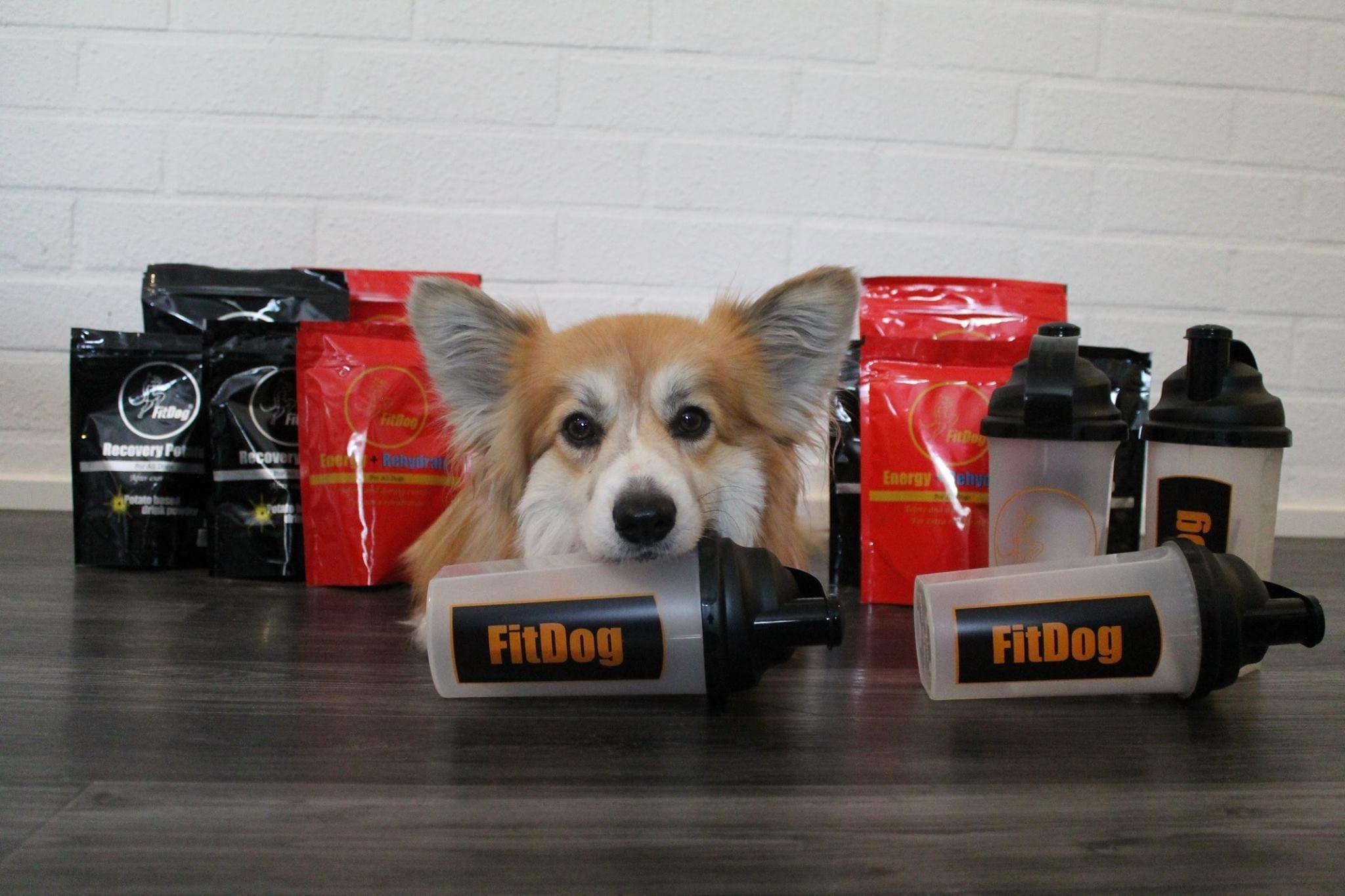 Huh hellettä! Vinkit kuumille kesäpäiville – Yhteistyössä Fitdog Finland Oy