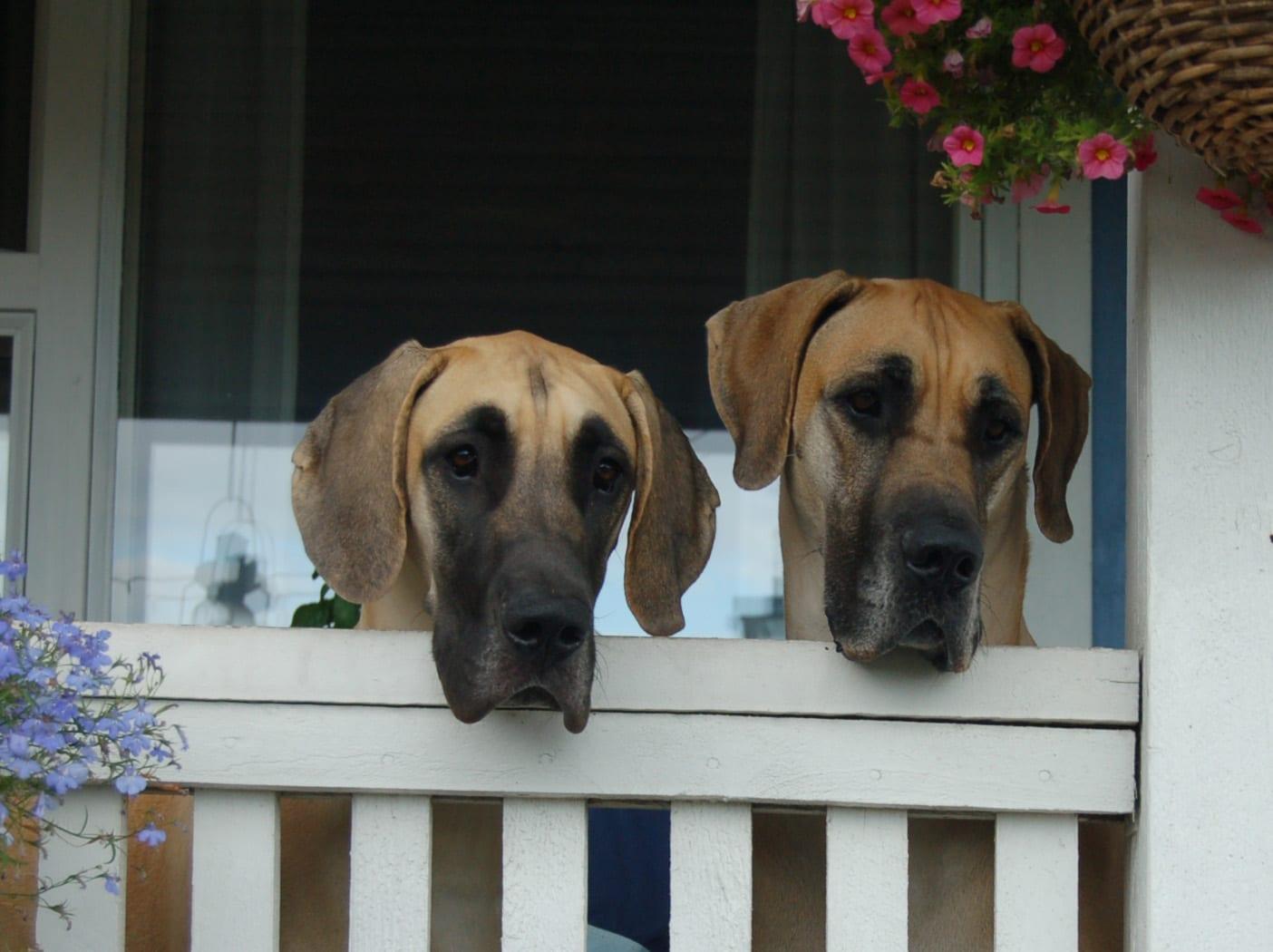 Ympäristöasiantuntijan vinkit vihreämpään koiraharrastukseen – Haastattelussa Hanna Lilja