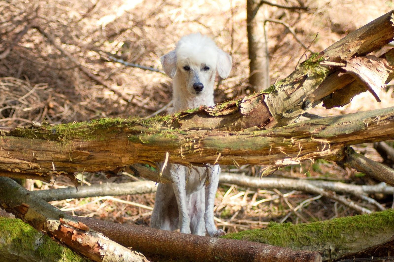 Koirien suolistoon liittyvät ongelmat