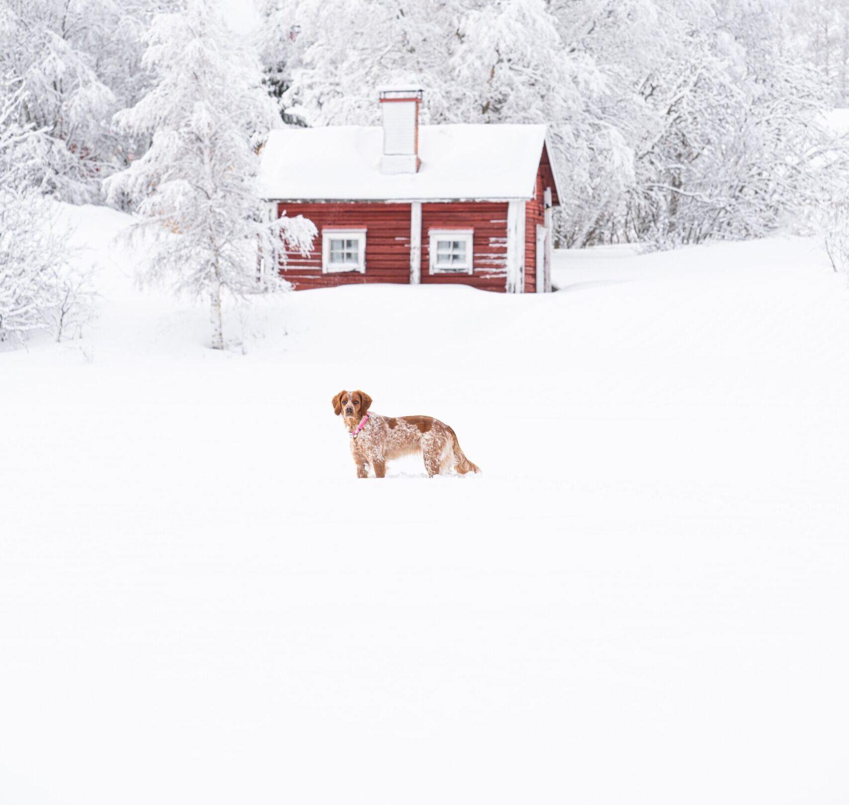 Dagsmark Koiranruoka Kokemuksia