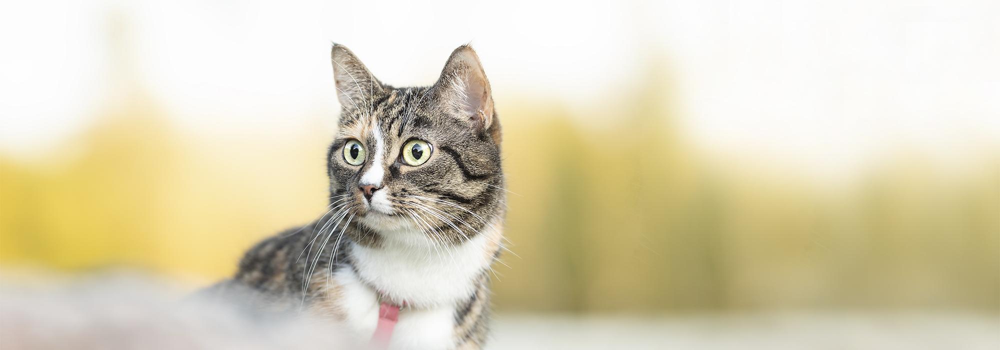 Miten valita paras kissanruoka?